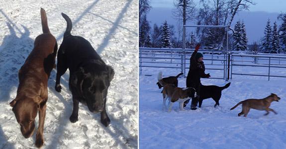 Dog Boarding Kasilof AK